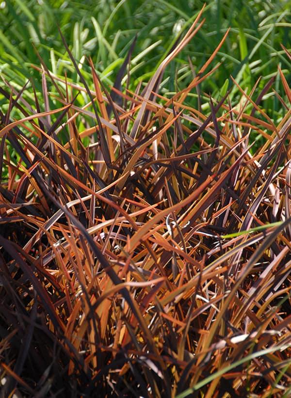 grasses & flax