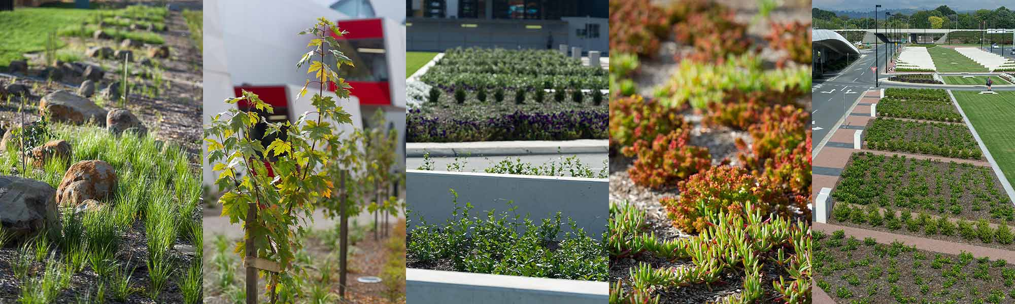 services | cool green horticulture
